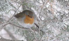 Հանրապետությունում սպասվում է մինչև -12 աստիճան ցուրտ. եղանակը Հյաստանում ու Արցախում