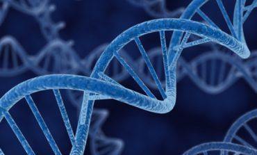 Որոշ գեներ մարդու մահվանից հետո շարունակում են գործել. գիտնականներ