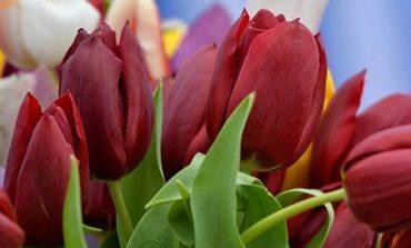 Մարտի 8-ի առթիվ 50 միլիոն ծաղիկ են ներկրել Մոսկվա