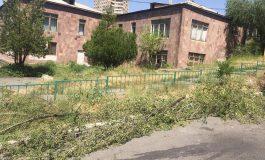 ՖՈՏՈ. Նոր Նորքի 5-րդ զանգվածում ծառեր են հատվել