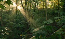 Պրահայի կորած բնակիչը գտնվել է Հաղարծնի վանքի մոտակա անտառում