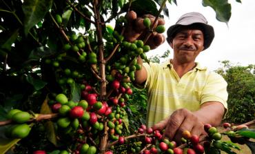 70 տարի անց Երկրի վրա սուրճ չի լինի
