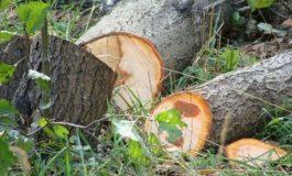 Ծառեր ու թփեր հատելու համար նաեւ 2 տարով կազատազրկեն. Կառավարությունը հավանություն տվեց Նաիրա Զոհրաբյանի նախագծին