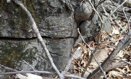«Դիլիջան» ազգային պարկում ծառերի թալանը շարունակվում է. ահազանգ