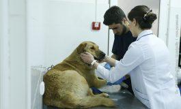 ՖՈՏՈ. Երևանում մեկնարկել է թափառող կենդանիների հավաքման, տեղափոխման, նախնական զննման, պատվաստման և ստերջացման ծրագիրը