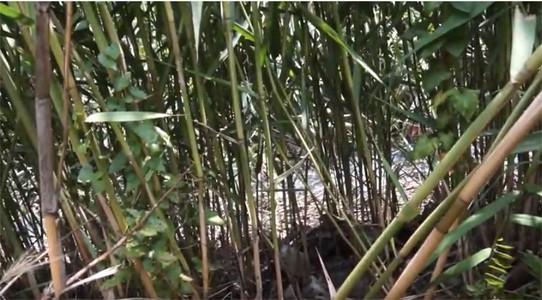 ՏԵՍԱՆՅՈՒԹ. Մարմարաշենի գյուղապետի բիոլոգիական զենքը. Իրականում ով է թունավորում գյուղացիներին