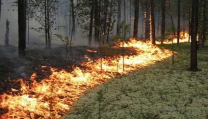 «Հրապարակ». Անտառն այրում են նրանք, որոնց ամռանն արգելվեց անտառահատումը