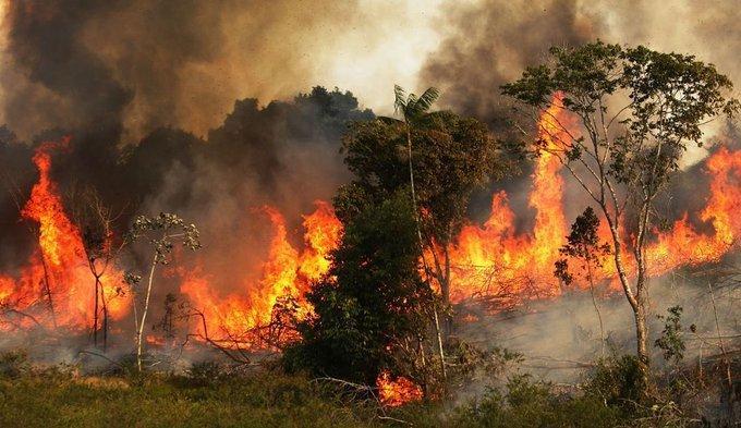 Ամազոնյան անտառի հրդեհների իրական մասշտաբները՝ ուղղաթիռից արված կադրերում (տեսանյութ)