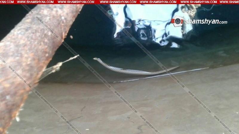 Ահազանգ. խմելու ջրի ջրավազանում օձեր կան