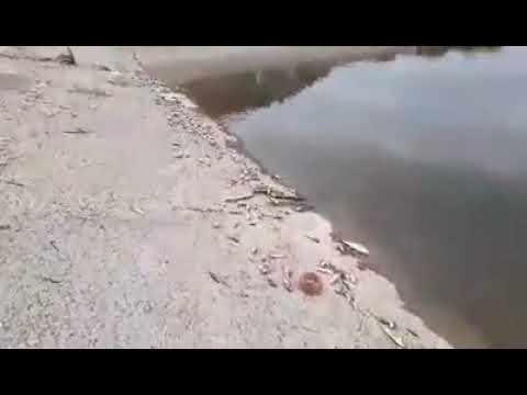 ՏԵՍԱՆՅՈՒԹ. Սատկած ձկներ՝ Խաչենի ջրամբարի ափերին