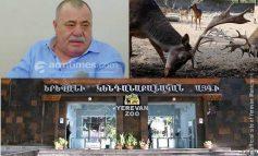 Կենդանաբանական այգում անկել է նախկինում Մանվել Գրիգորյանին պատկանած եղնիկը