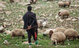 25-ամյա հովիվն իր 44-ամյա սիրուհի կթվորուհուց լսելով՝ ինչ դաժան ձևով է ընդհատել 7 ամսական հղիությունը՝ կրակել է գլխին
