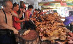 Չինաստանում առաջին անգամ արգելել են շներ ու կատուներ ուտել