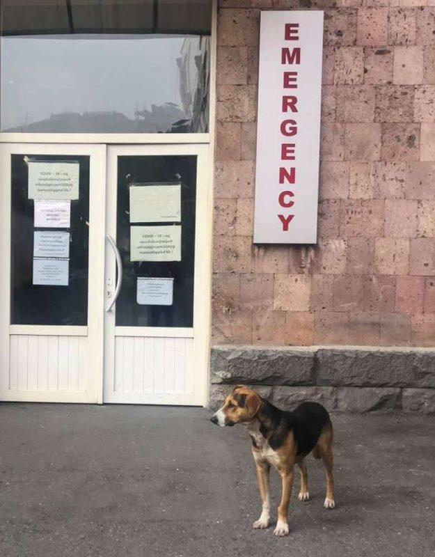 ՖՈՏՈ. Շունը վիրավոր զինվորին տեղափոխող մեքենայի հետևից վազելով հասել է Երևան. մինչ օրս հիվանդանոցի մուտքից այն կողմ չի գնում